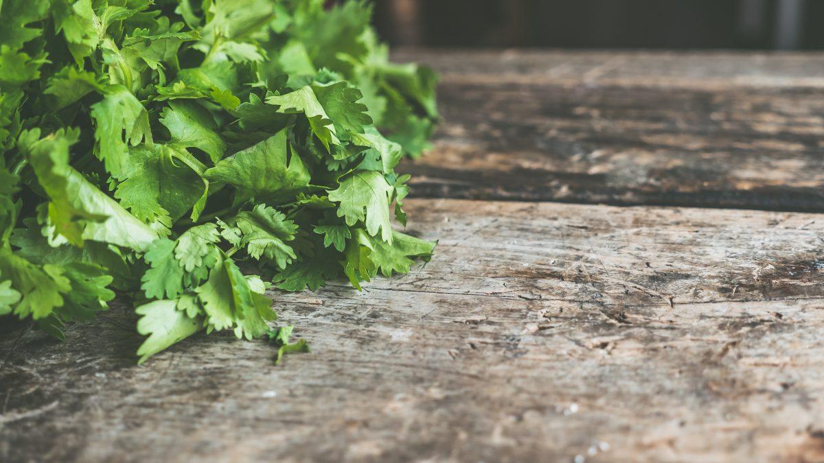 cilantro on wood table